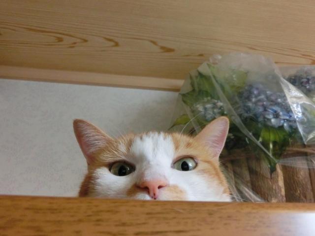 猫が覗いている